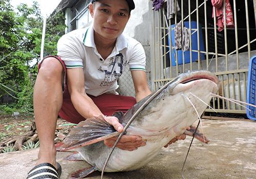 Một con cá lăng bán được hơn 13 triệu đồng. Ảnh: Thiên Thiên
