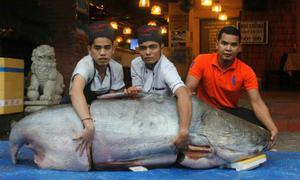 'Mổ thịt cá tra nặng 160kg ở Sài Gòn' xôn xao mạng XH