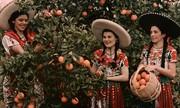 Cần bao nhiêu cô gái để hái được 60 quả cam trong một phút?