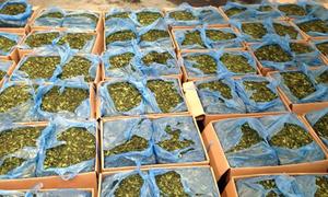Lá cây chứa ma tuý cực mạnh, giá triệu USD nhập lậu vào Việt Nam