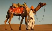 Ông bố làm cách nào để chia 17 con lạc đà cho 3 đứa con trai?