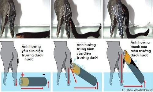 kha-nang-phi-than-phong-dien-cua-sat-thu-rung-amazon-2