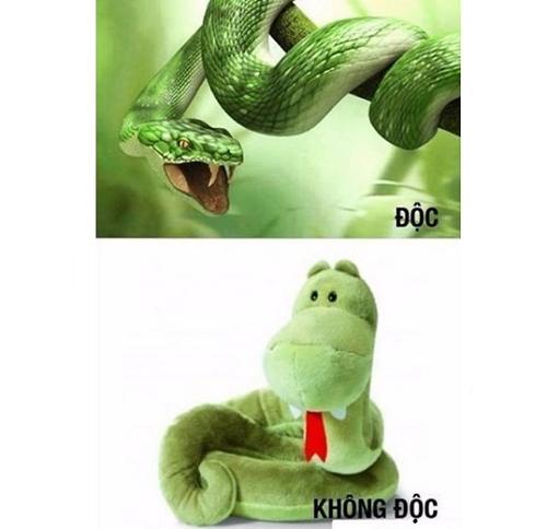 Cách phân biệt rắn độc và rắn không độc.