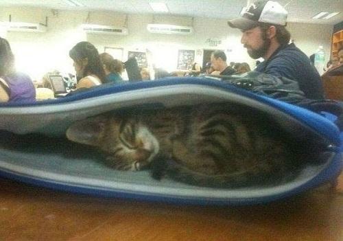 Khi mèo đi học.