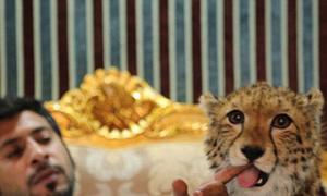 Thú nuôi sư tử, báo đốm của giới siêu giàu UAE