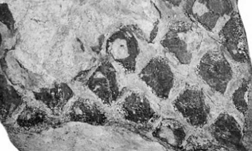 Dấu vết được coi là hóa thạch rồng đen ở Vân Nam, Trung Quốc. Ảnh: SCMP. Dấu vết được coi là hóa thạch rồng đen ở Vân Nam, Trung Quốc. Ảnh: SCMP.