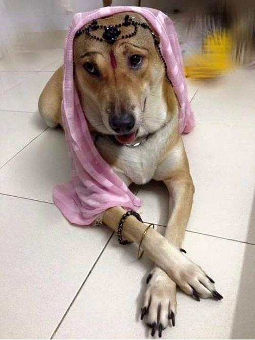 Cô dâu 8 tuổi phiên bản cún cưng.