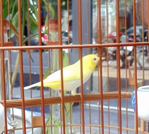Chim hoàng khuyên được nhiều đại gia săn lùng.
