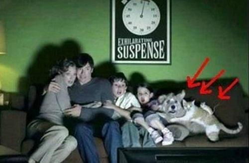 Khi cả gia đình cùng xem phim kinh dị.
