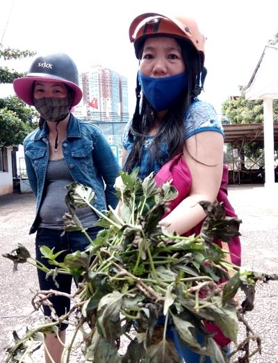Mùi amoniac khó chịu khiến người dân phải đeo khẩu trang, còn cây xanh héo lá. Ảnh:Xuân Mai