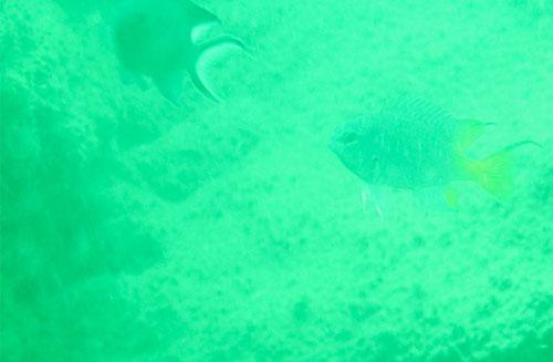 Cá thia trên nền đáy
