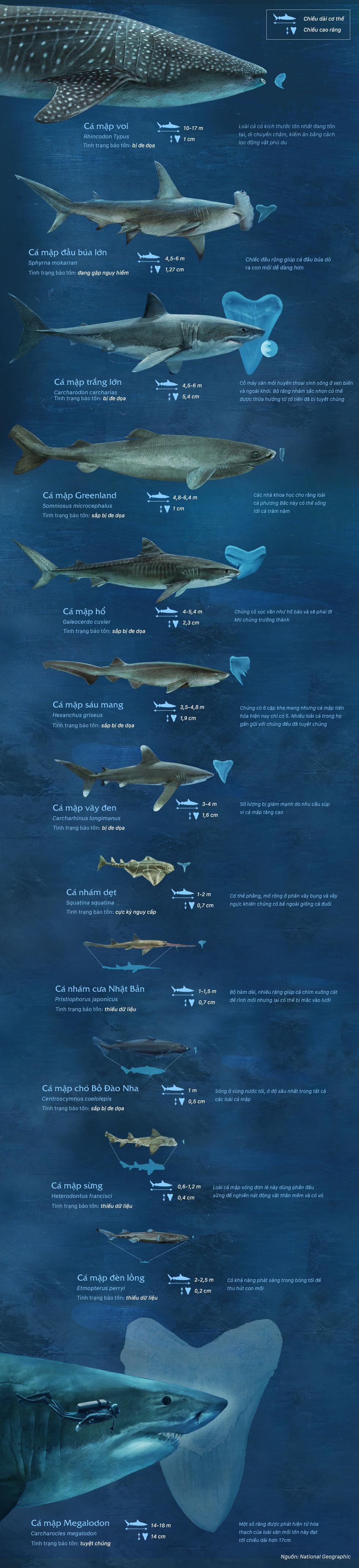 So sánh kích thước của chúa tể đại dương