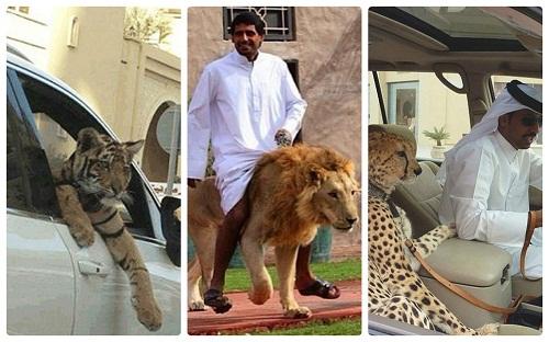 Thú cưng của dân Dubai - chỉ có ở Dubai, Dubai