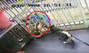 Cẩu tặc thò tay qua rào trộm chó Alaska chục triệu đồng