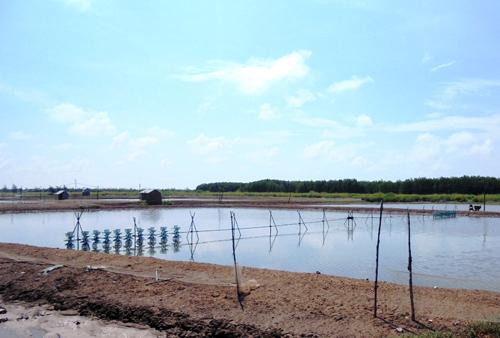 Hàng ngàn héc ta nuôi trồng thủy sản của nông dân Cà Mau bị thiệt hại, nhưng không được hỗ trợ do vướng quy định.Ảnh: Phúc Hưng