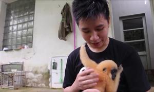 Bé vượn quý hiếm bám chặt 'bố nuôi' Việt Nam