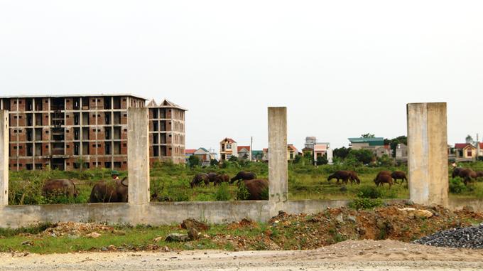 Dự án đại học hơn 400 tỷ thành nơi chăn thả trâu bò