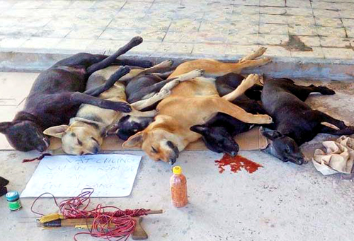 Những con chó bị nhóm cẩu tặc bắt. Ảnh: An Nam