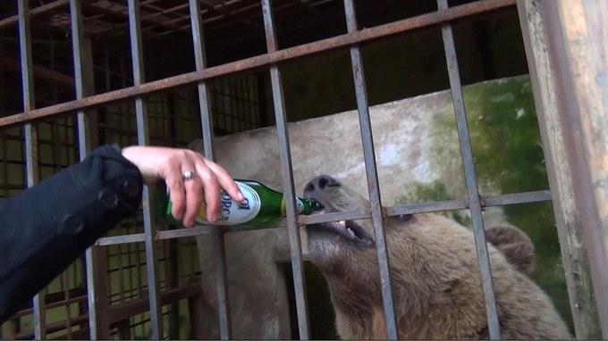 Gấu bị ngược đãi làm trò mua vui ở Albania