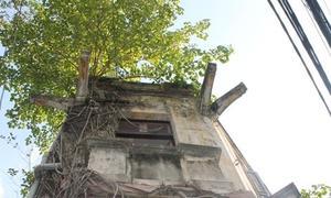 Biệt thự cây quấn bỏ hoang ở trung tâm Sài Gòn