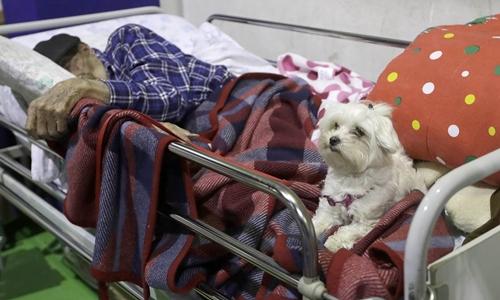 Chú chó trắng ở bên cạnh ông lão 97 tuổi sống sót sau động đất. Ảnh: NBC News.