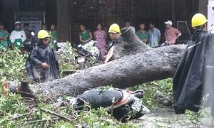 Cây đổ, đường ngập sau cơn mưa lớn ở Sài Gòn