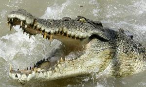 Cá sấu dài 4 m rình đớp người qua đường dưới dòng nước lũ
