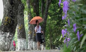 Dân Hà Nội tiếc nuối hàng cây xanh bên hồ Thủ Lệ