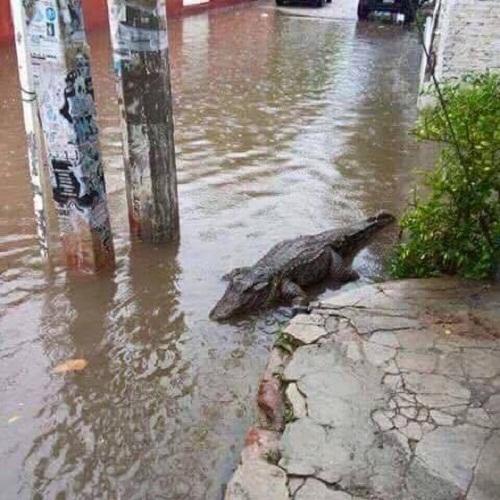 Thú cưng đi lạc sau cơn mưa.