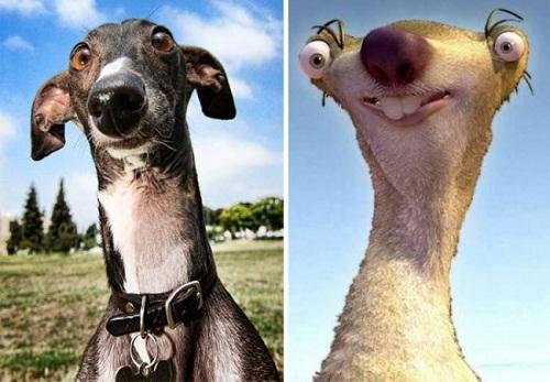 Chú chó giống hệt anh chàng Sid ngớ ngẩn trong Kỷ băng hà.