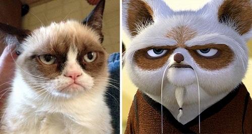 Chú mèo này có khuôn mặt nghiêm nghị hệt sư phụ Shifu trong Kungfu Panda.
