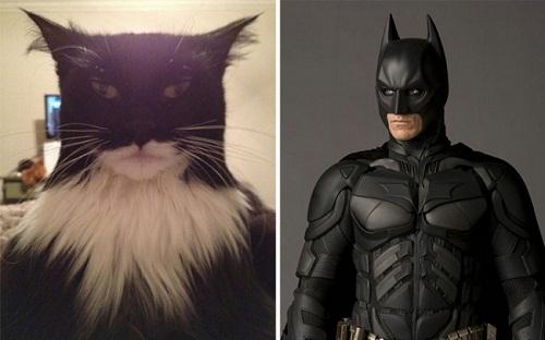Người dơi trông khá giống với chú mèo oai phong này.