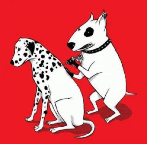 Sự tích ra đời của loài chó đốm.