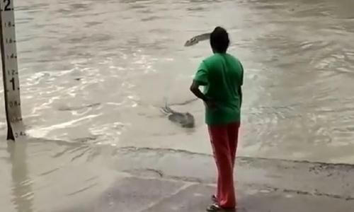 Người phụ nữ da đen đuổi con cá sấu nước mặn đi chỗ khác bằng cách dùng dép lê đập và la hét