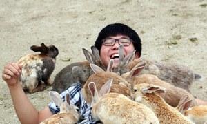 Hòn đảo thỏ nhiều hơn người ở Nhật Bản