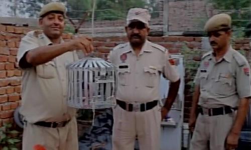 Cảnh sát địa phương cầm chiếc lồng chứa conchim bồ câu mang thư đe dọa ởPathankot, Punjab, Ấn Độ. Ảnh: ANI