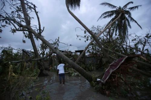Cây cối đổ rạp tại Les Cayes, Haiti. Ảnh: Reuters