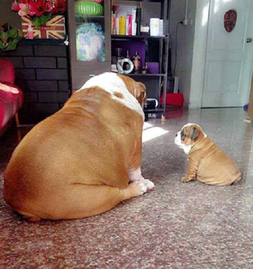 Bố nào con nấy.