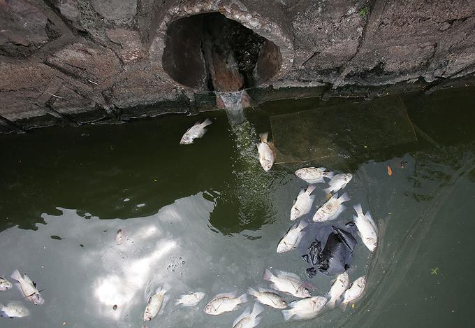 Hồ Tây chờ nhà máy xử lý nước thải nghìn tỷ 'ứng cứu'