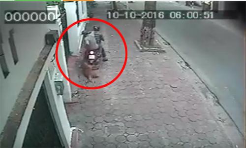 Cẩu tặc táo tợn câu trộm chó Phú Quốc giữa ban ngày