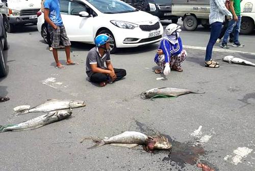 Người dân đã kéo cá chết ra ngồi chặn quốc lộ. Ảnh: H.C.T