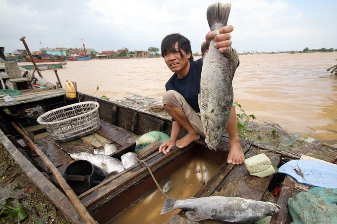 Bè cá bị lũ đánh bay lên bờ, dân mất tiền tỷ