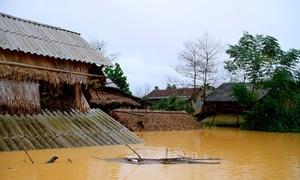 8 người chết do mưa lũ ở miền Trung