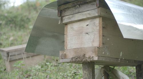 Mật ong Quản Bạ được nuôi hoàn toàn tự nhiên trong rừng núi đá. Ảnh: bizmedia