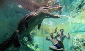 Du khách mạo hiểm đối mặt bầy cá sấu