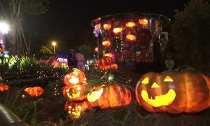 Người Sài Gòn thích thú với vườn bí ngô Halloween