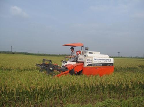 Người công nhân của doanh nghiệp đang lái máy gặt lúa.