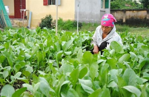 Nguyên tắc 4 đúng trong việc sử dụng thuốc BVTV giữ rau không bị ảnh hưởng bởi hóa chất độc Nguồn: VietGap