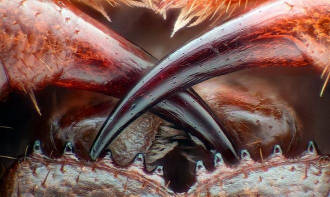 Những bức ảnh chụp dưới kính hiển vi đẹp nhất thế giới