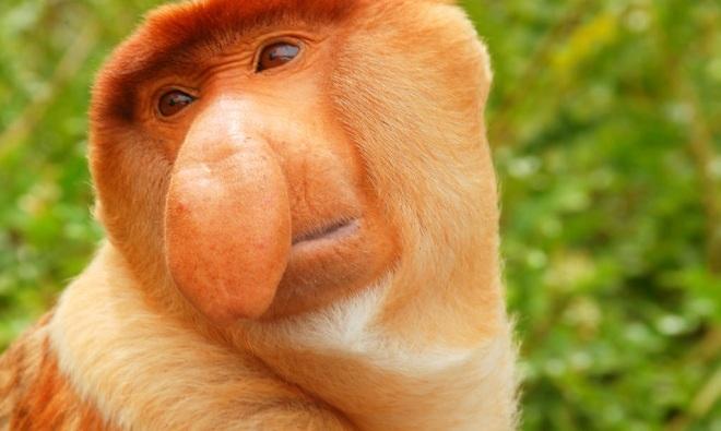 Những loài vật xấu xí nhất trên Trái Đất